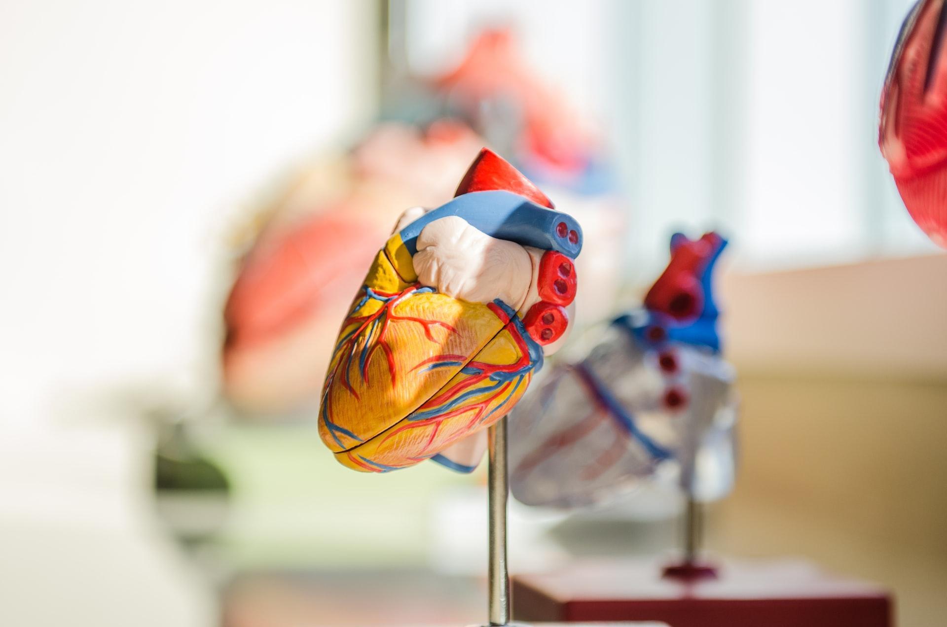 Benefícios do Treinamento de Força no Sistema Cardiovascular